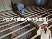 福山市シロアリ床修理